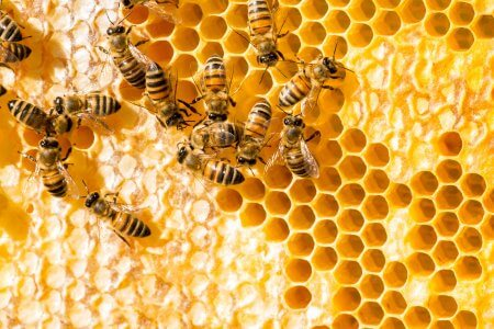 inventions inspired by nature - a bee hive